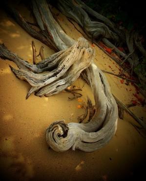 Driftwood Spotlight
