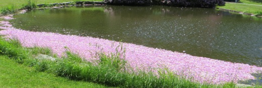 Petals on the Pond