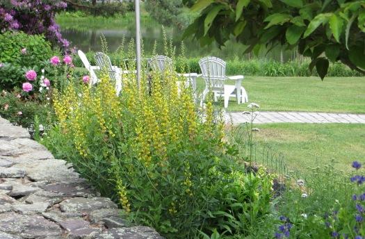 662015 Landscape 065 baptisia garden
