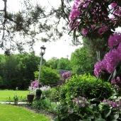 garden 5-27-17 007 rhodo