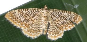 Moth-b