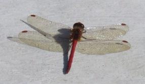 018 My dragonfly