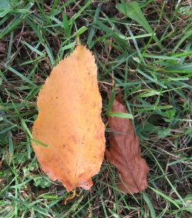 10-25-17 055 tan and brown leaf couple
