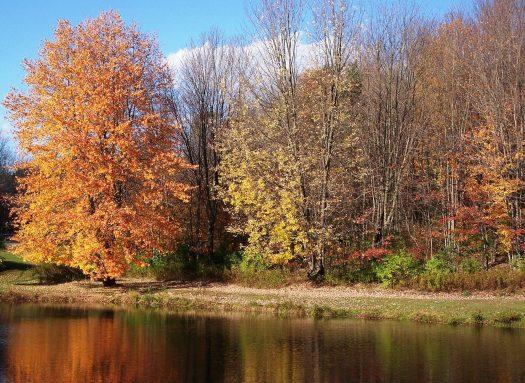 cropped-100_1648-autumn-favorite-b1.jpg