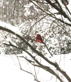 1-17-18 winter heavy snowfall 007
