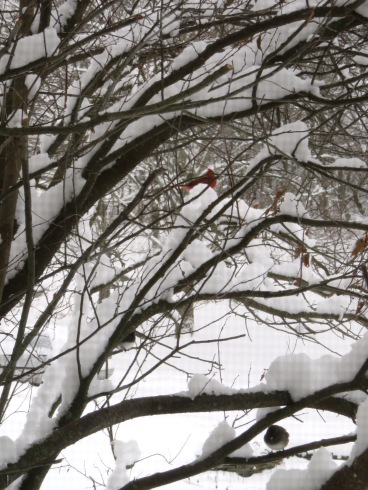 1-17-18 winter heavy snowfall 013