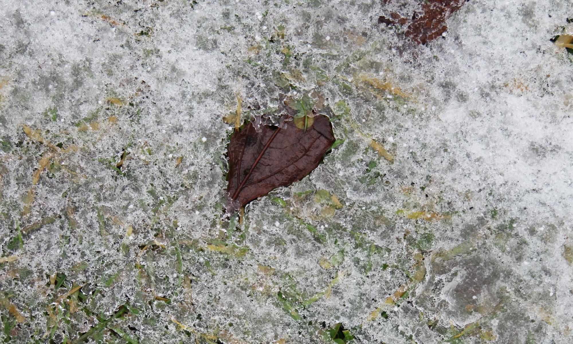 Heart Leaves Frozen in Time