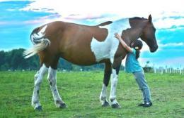 horse-hug girl