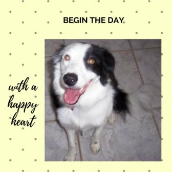 Photo of a smiling black/white border collie with the inscription