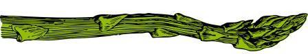 asparagus-32916_1280illus