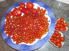 tomatoes 9-15-18 009