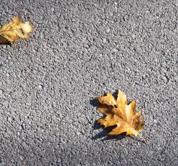 Gold Leaf Landing