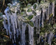 January 2019 085 Deep Freeze