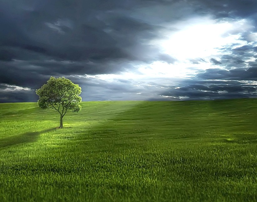 Storm clouds behind an enlightenend lone tree amidst vast field of green grass