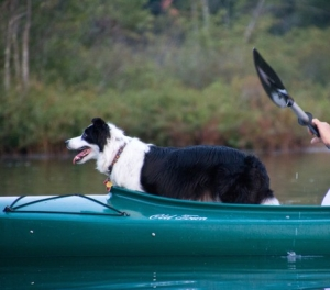 Border Collie kayaking