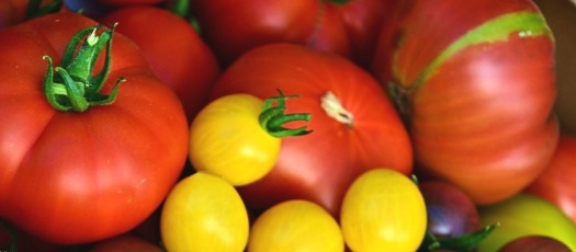 Varieties of tomatoes - red beefsteak, heirloom, yellow cherry, purple, green, striped and blemished