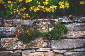 Natural stone wall with yellow flowers and green plants growing out and over it