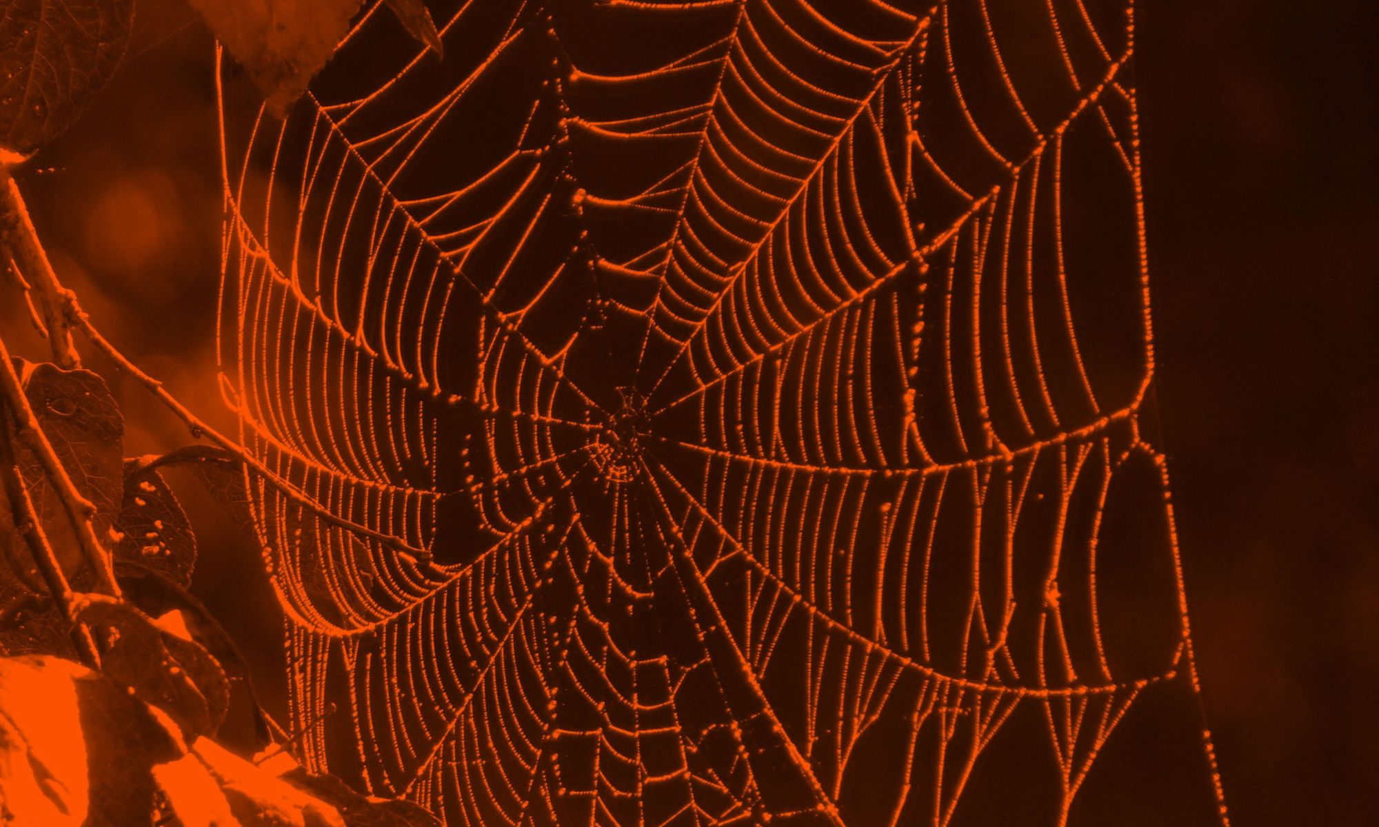 Intricate spider web in black and orange Halloween colors