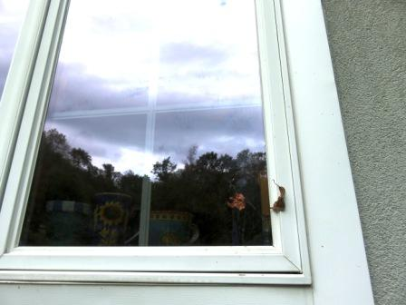 window leaf 001BC