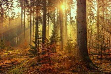 Golden beams of sunshine through an autumn forest