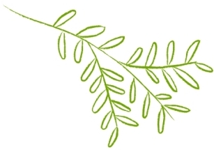 Leaf illustration outlined in lime green