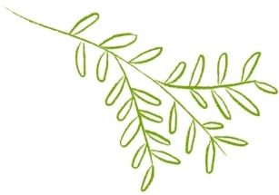 Leaf illustration outlined in lime green