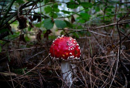 Red mushroom growing out of dirt and darkness