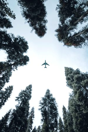 Circle of tall evergreens with airplane in the middle