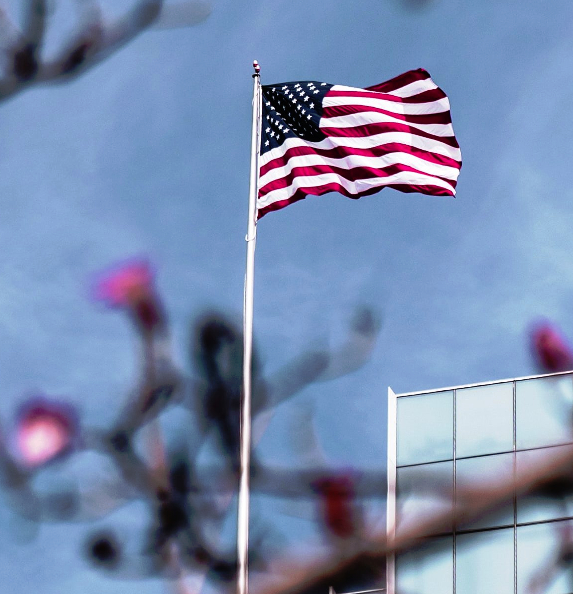 American Flag proudly waving against backdrop of bare cherry blossoms