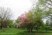Cedar Crest Park WMC
