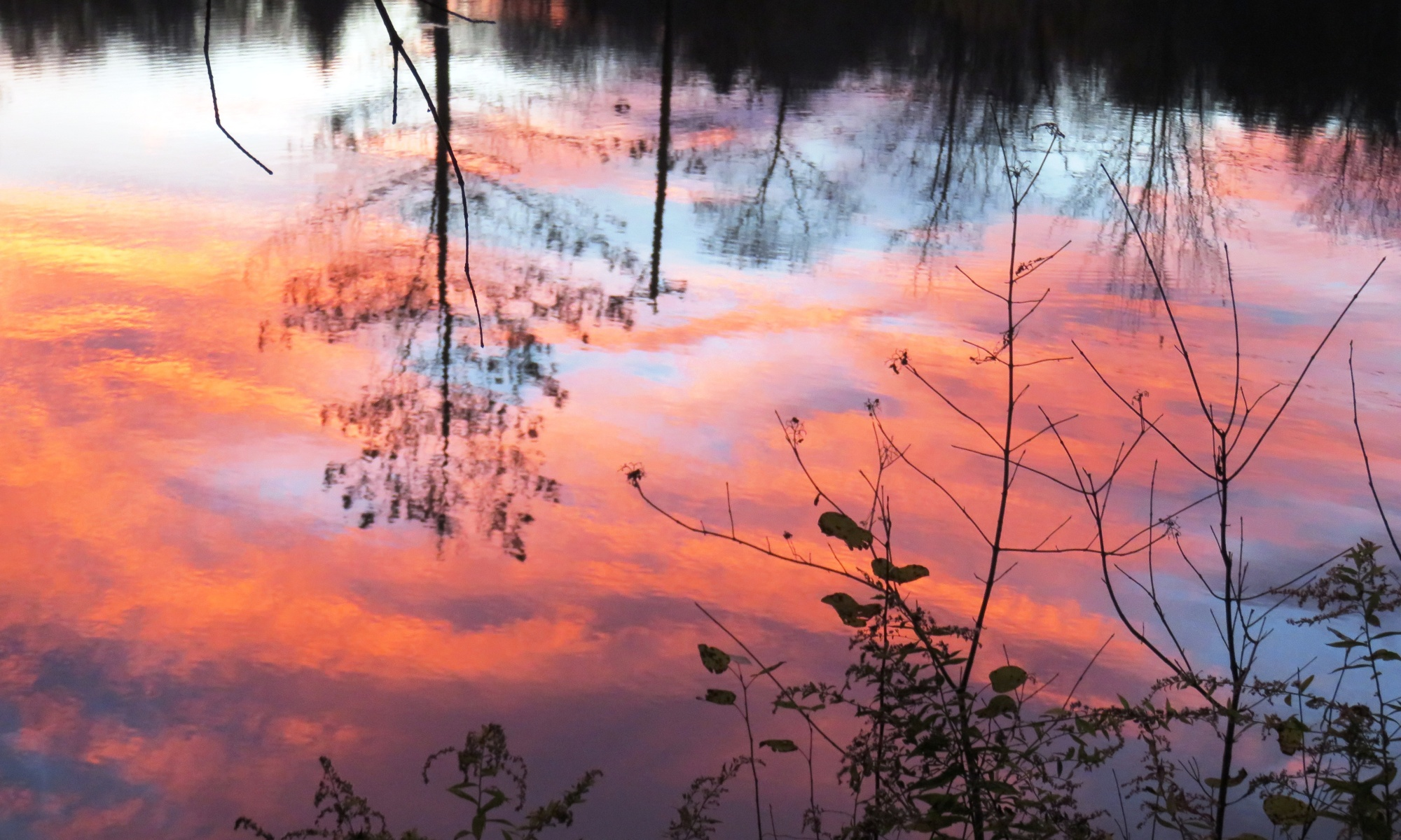 Firey red, orange and blue sky reflected in water with black silhoutted trees and weeds