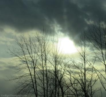 Menacing grey clouds in darkened sky above silhoutted trees