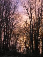 Pink Trees WMC
