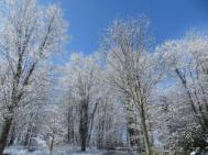 Snowy Trees WMC