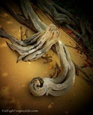 Texture-BVI Driftwood WMC