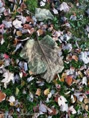 Textures-Autumn Leaves WMC