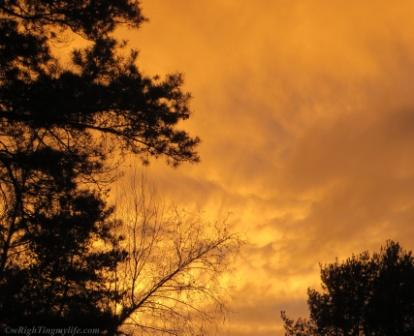 Cloudy orange sky above silhoutted trees appears smokey and on fire