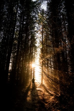 Solo person walking uphill through darkened forest toward rays of light