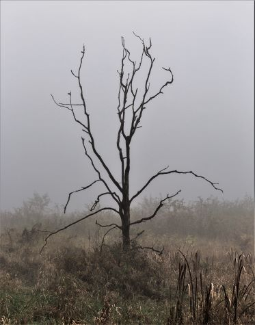 Barren tree devoid of life