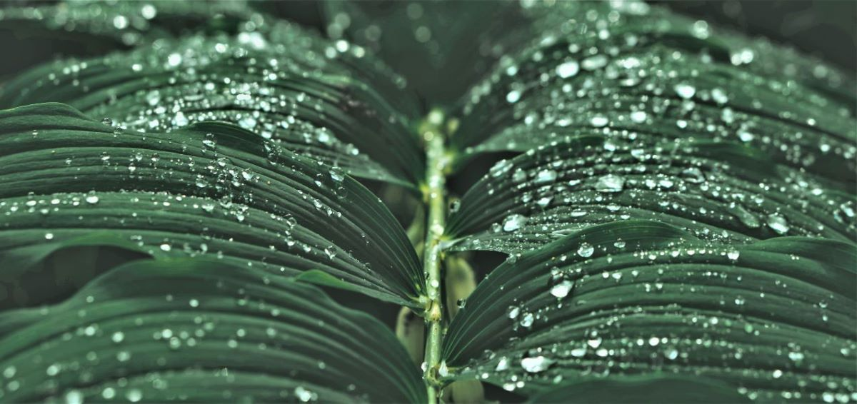 Rain drops on branch of green leaves