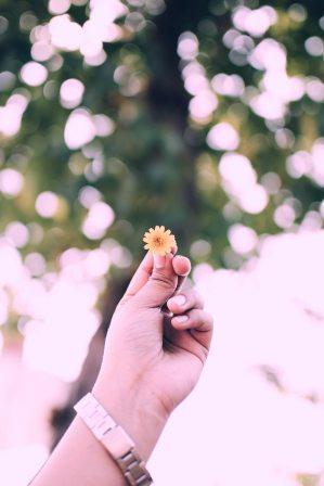 Hand offering flower