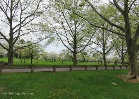 City park of Spring blooming trees