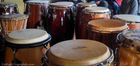 Assorted conga and djembe hand drums