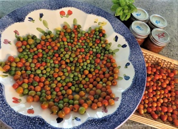 Large bowl of red and green cherry tomatoes next to basket of ripened cherry tomatoes and jars of salsa and basil sprigs