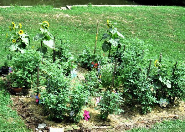 July Veggie and Herb Garden Flourishing