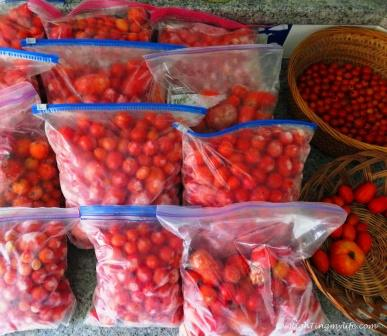 Plastic quart bags of cherry tomatoes next to basket of tomatoes of all sizes