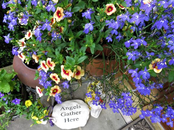 """Purple blue and yellow petunia bell flower pot arrangement with stone indicating """"Angels Gather Here"""""""