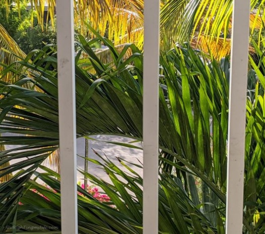 Palm fronds through balcony slats at Turks & Caicos