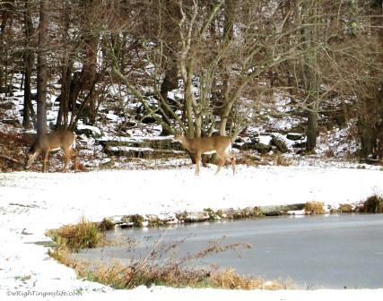 Two deer in winter landscape of snow