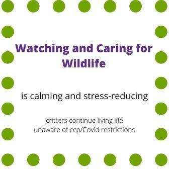 "Sign indicating ""Watching and caring for Wildlife is calming and stress-reducing...critters continue living life unaware of ccp/Covid restrictions"""